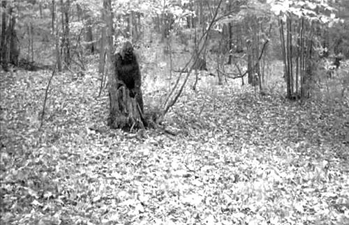 bigfoot-trail-cam-greenbrier-alabama-4