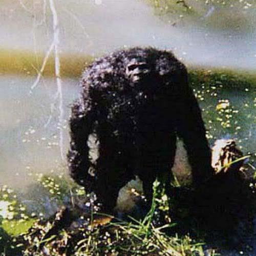 bigfoot-wild-creek-photo-2