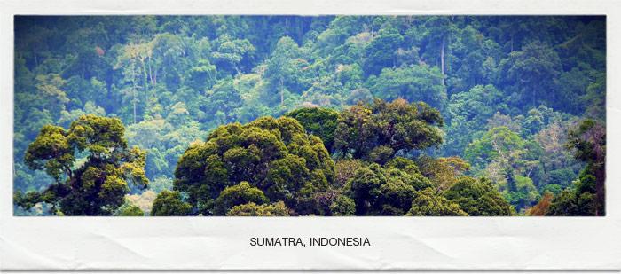 bigfootbase-sumatra-orangpendek-5