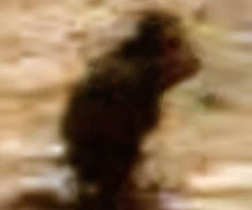 Bigfoot on Mars Blobsquatch Bigfootbase
