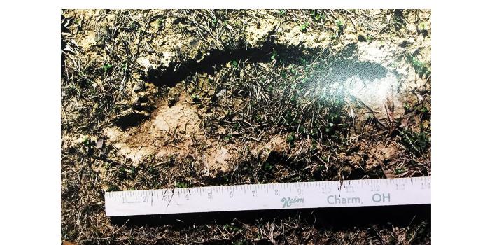 ozark bigfoot evidence footprint