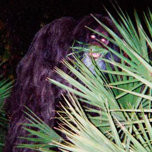 skunk ape compelling bigfoot evidence