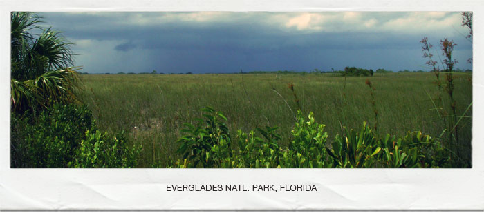 Everglades Skunk Ape Bigfoot Base