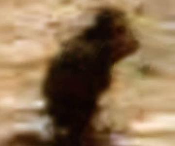Bigfoot on Mars Blobsquatch Bigfootbase